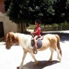 Deres   riding   experience  for  children